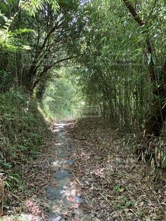 木の丸いトンネルの写真・画像素材[4699436]