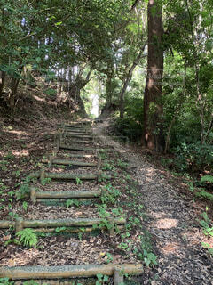 山の丸太階段の写真・画像素材[4699443]