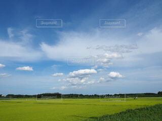 のどかな風景の写真・画像素材[4734328]