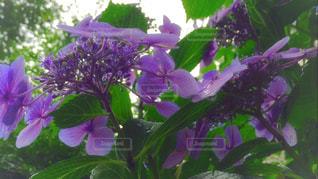 花の写真・画像素材[590783]