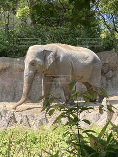 動物園のぞうの写真・画像素材[4700833]