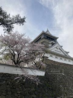 小倉城と桜の写真・画像素材[4700835]