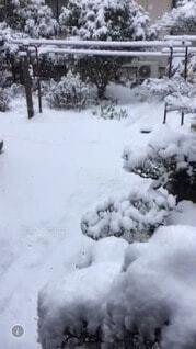 庭の雪の写真・画像素材[4700844]
