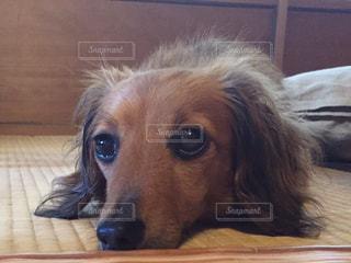 犬の写真・画像素材[220883]