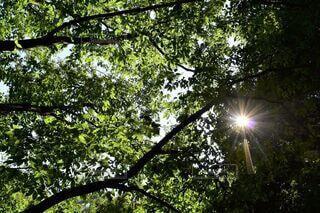 横浜の木漏れ日の写真・画像素材[4777415]