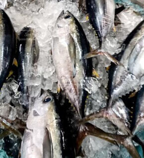沖縄市市場の魚の写真・画像素材[4709189]