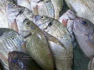 魚市場の写真・画像素材[4709598]
