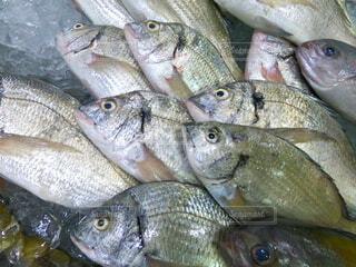 市場の魚たちの写真・画像素材[4709599]