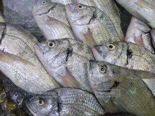 市場の魚の写真・画像素材[4709605]