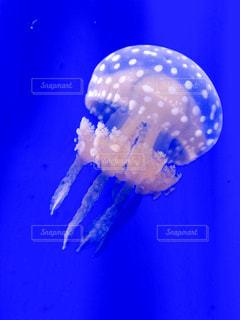 海の写真・画像素材[209549]