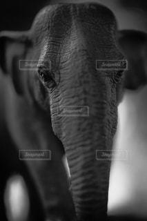 自然の写真・画像素材[211055]