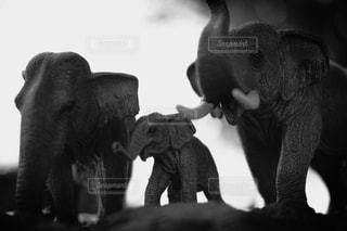動物の写真・画像素材[211056]