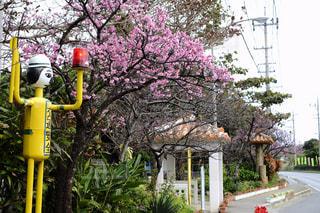 No.344783 桜