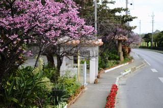 桜の写真・画像素材[344784]