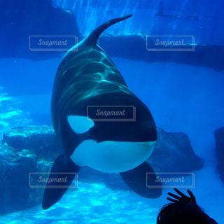 水のプールで泳ぐ魚の写真・画像素材[1197668]