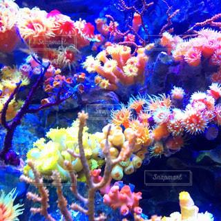 異なる色のサンゴの束の写真・画像素材[1197670]