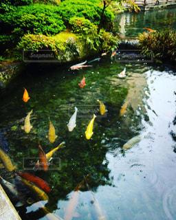 下呂温泉での風景の写真・画像素材[1404516]