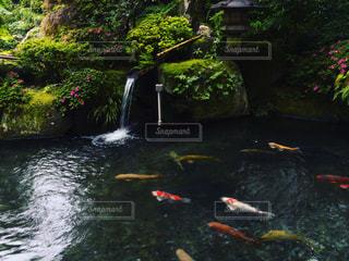 下呂温泉での風景の写真・画像素材[1404517]
