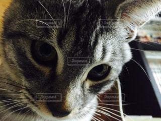 猫の写真・画像素材[209686]