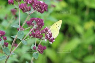 花の写真・画像素材[209668]