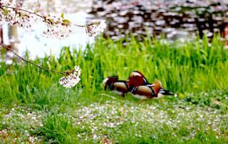 自然の写真・画像素材[209683]