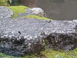 水の体の隣の岩の上に座っている鳥の写真・画像素材[4741965]