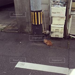 猫の写真・画像素材[209736]