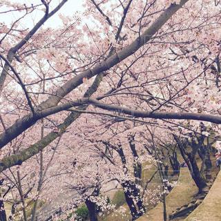 春の写真・画像素材[210043]