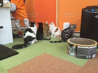 猫 - No.210057