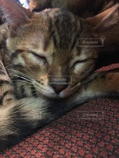 猫の写真・画像素材[210119]