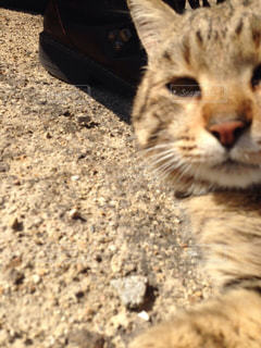 猫の写真・画像素材[213344]