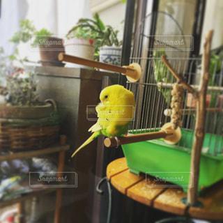 鳥の写真・画像素材[260846]
