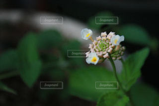 花の写真・画像素材[654712]
