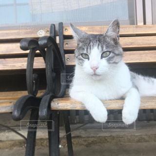 猫 - No.689010