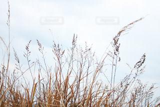 近くの植物のアップの写真・画像素材[978871]