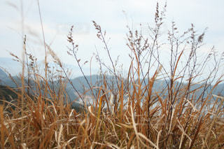 乾いた草の山の写真・画像素材[978872]