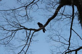 木の枝に座っている鳥の写真・画像素材[1005277]