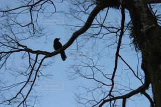 木の枝にとまった鳥の写真・画像素材[1005278]
