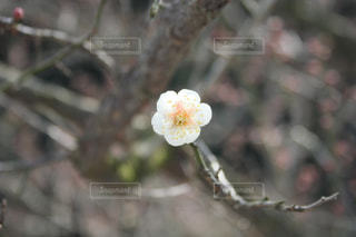 近くの花のアップ - No.1012733