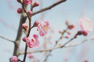 木の枝に花の写真・画像素材[1014395]