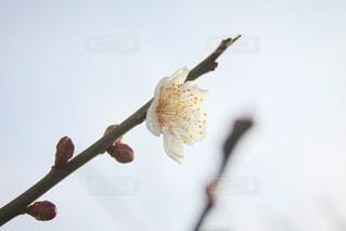 木の枝に花の写真・画像素材[1014397]