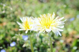 近くの花のアップの写真・画像素材[1062129]