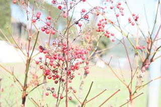 植物の花と木の写真・画像素材[1062134]