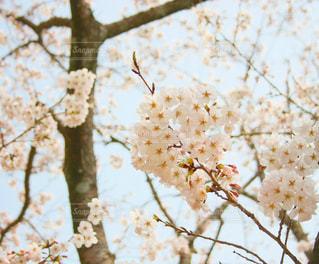 近くの木のアップの写真・画像素材[1083370]