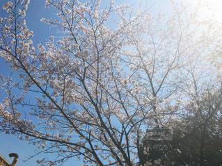 近くの木のアップの写真・画像素材[1092152]