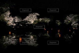 花の写真・画像素材[1095505]