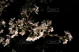 花の写真・画像素材[1095506]