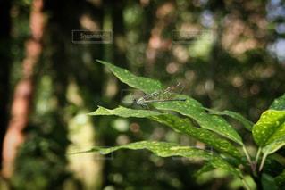 近くの木のアップの写真・画像素材[1220595]