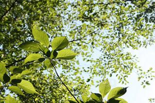植物の花と木の写真・画像素材[1220599]