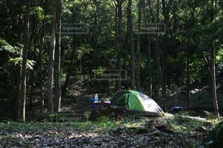 森の中のテントの写真・画像素材[1220605]